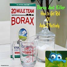borax ant how to get rid of