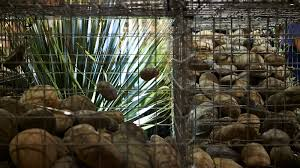 uses for gabions in the garden
