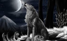 desktop black wolf images in the wild