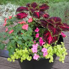 shade garden container ideas photograph