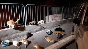 Petition update · Street cats bunch in Haifa enjoying their dinner ...