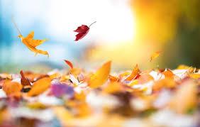 Herbst, Halloween - Medienliste