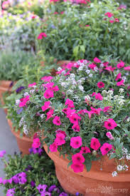 secrets to successful container gardening
