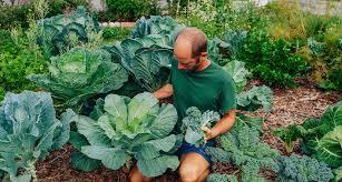 gardening for beginners in orlando