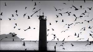 The Cinematic Orchestra - Arrival of The Birds & Transformation - YouTube
