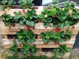 pallet strawberry planter pallets