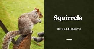 How To Get Rid Of Squirrels Pest Control Products