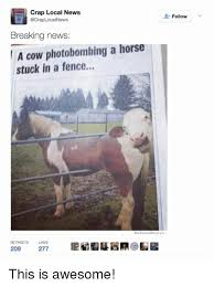 Crap Local News Acraplocal News Breaking News A Cow Photobombing A Horse Stuck In A Fence We Know Meme Retweets Likes 209 277 Follow This Is Awesome Meme On Me Me