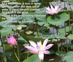 lotus flower buddha quote album on quotesvil com lotus flower