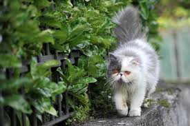Indoor Vs Outdoor Cats Should You Let Your Kitty Roam Daily Paws