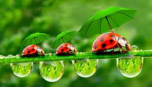 ladybug wallpaper desktop jgwfo51