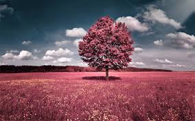 pink nature wallpaper 53 images
