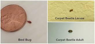 Get Tiny Black Termites  Background