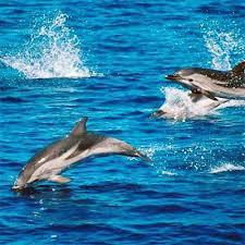 Avvistato un branco di delfini nell'Area Marina Protetta del Plemmirio -  Diario1984