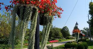 Proven Winners® ColorChoice® Plant of the Week: Cleveland Grows ...