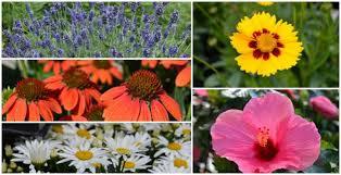 top 10 summer blooming perennials