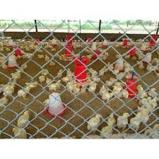 Poultry Farm Fencing At Rs 9 50 Square Feet Kalmana Nagpur Id 19616984462