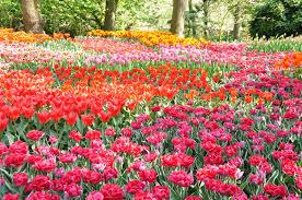 flower garden view background