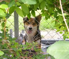 How To Keep A Dog From Digging Under A Fence