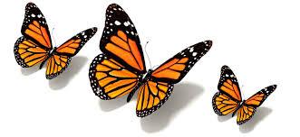 أجمل صور و خلفيات الفراشات Butterfly Wallpapers