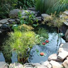Ponds Fountains And Aquatic Plants Buying Guide