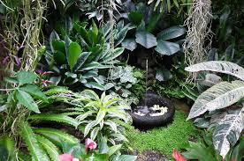 tropical foliage plants tropical