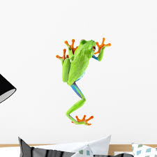 Amazon Com Wallmonkeys Red Eyed Tree Frog Wall Decal Peel And Stick Graphic Wm183974 18 In H X 11 In W Home Kitchen