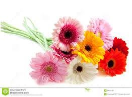 Flores especiales foto de archivo. Imagen de macro, flores - 24897300