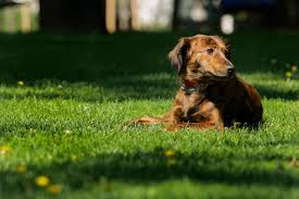 Consider This Before Installing An Electric Dog Fence Petplan