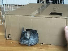homemade diy cardboard maze for small