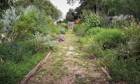 central texas gardener pbs