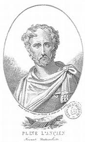 Plínio, o Velho – Wikipédia, a enciclopédia livre