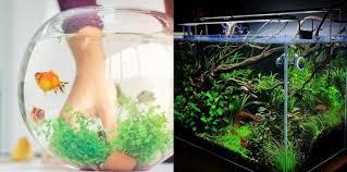 Download Cara Bikin Aquarium Filter Samping PNG