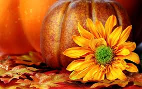 pretty fall flowers pumpkin wallpapers
