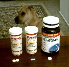anxiety cations for dogs