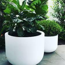 planters plants