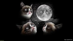 desktop wallpaper grumpy cat picserio