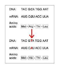 mutations flashcards quizlet