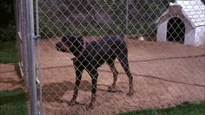 212 Doberman Pinscher Videos And Hd Footage Getty Images