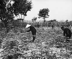 The Strategic Hamlet Program And Civic Action In Retreat Six Vietnam S Lost Revolution