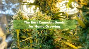 Best Weed Strains of 2020 | 10Buds Cannabis Growing Guide