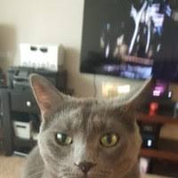 "20+ ""Wendi Morris"" profiles | LinkedIn"