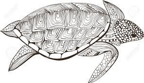 Schildpad In Zentangle Zenart Doodle Stijl Geisoleerd Op Een