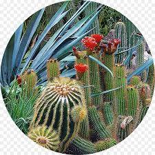 cactus cartoon png 1000 1000