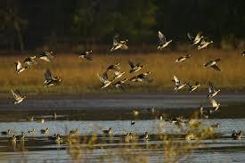 duck hunting desktop wallpapers top
