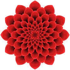 Amazon Com Divine Designs Pretty 3 D Optical Illusion Mandala Dahlia Flower Red Vinyl Decal Sticker 8 Wide Automotive