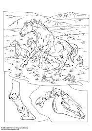 Kleurplaat Wilde Paarden Gratis Kleurplaten Om Te Printen