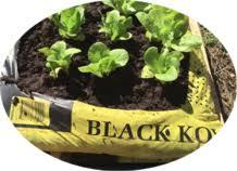 black kow the manure home