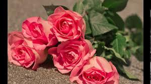 ورود جميلة ورائعة اجعلي خلفية الكمبيوتر باحلي صور الزهور