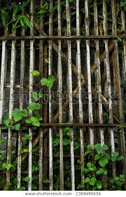 Plants That Grow Vines On Wooden Nature Stock Image 1369495634